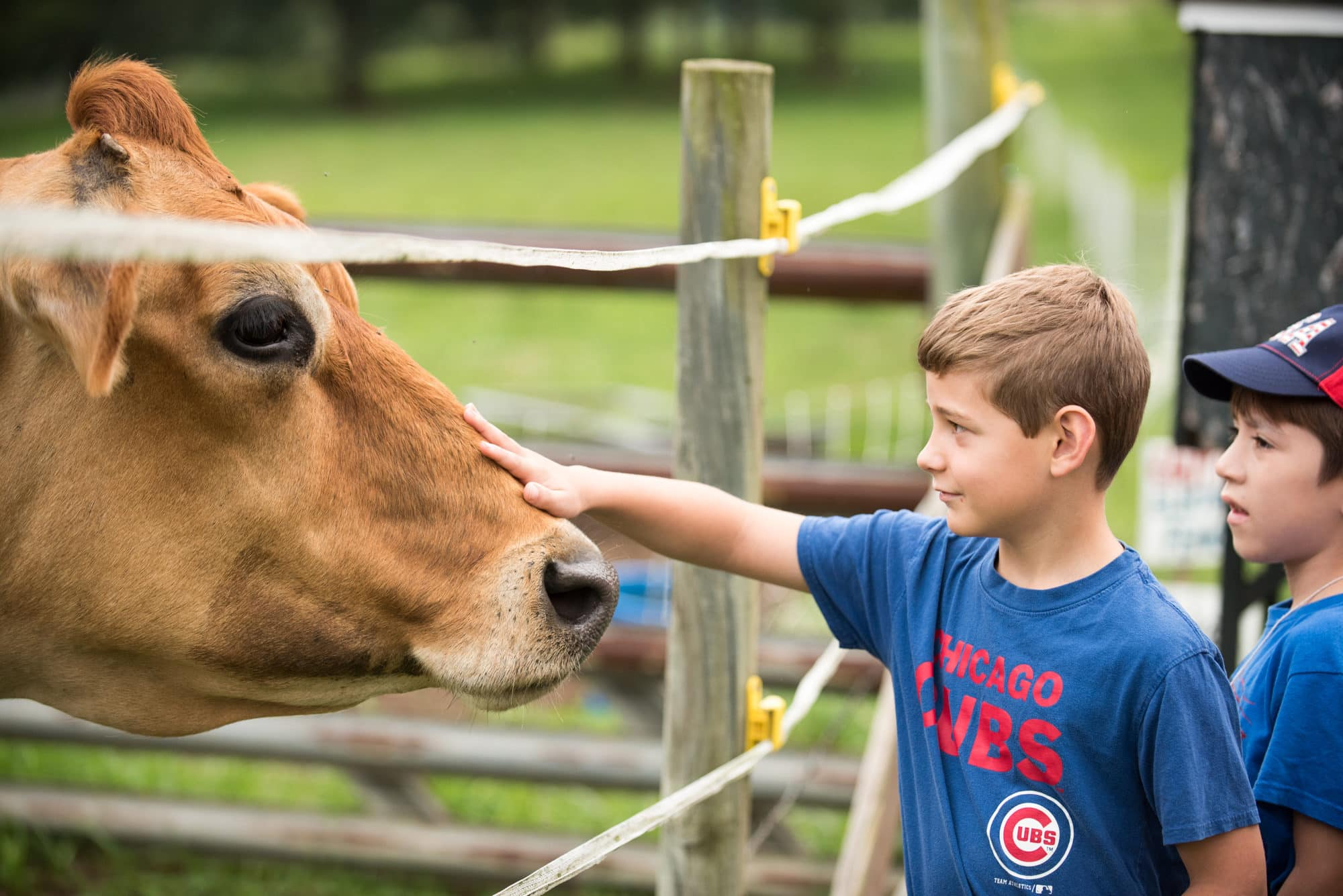 boy petting cow