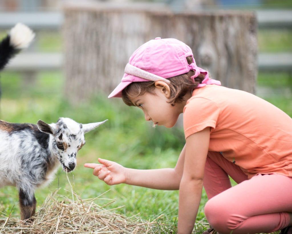 child petting goat